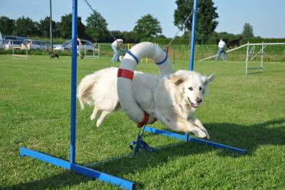 Hondenschool rijsbergen